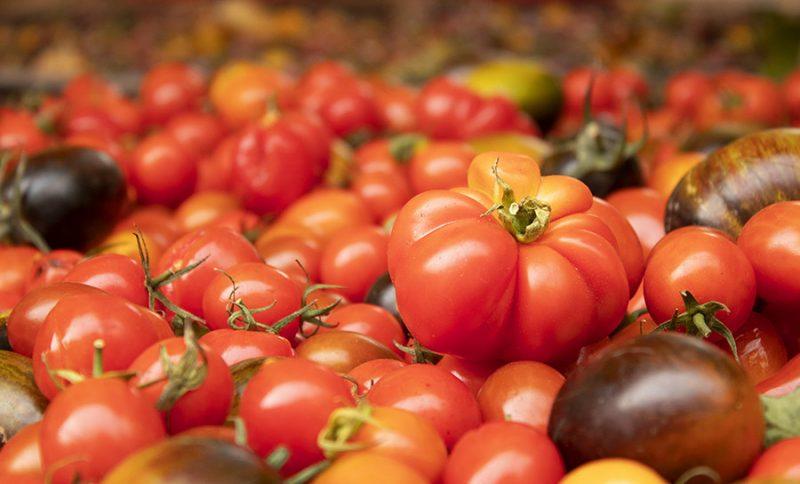 Beautiful pdxfarm vine tomatoes