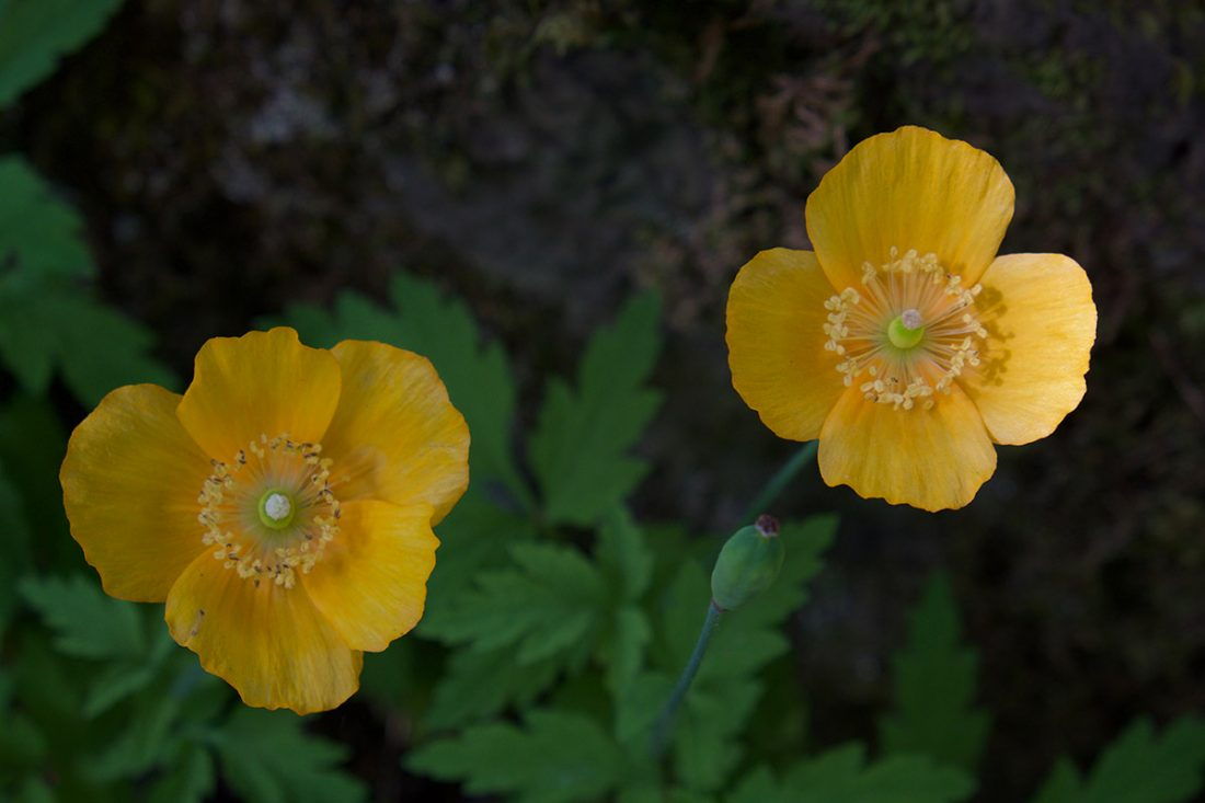 a ballad of yellow flowers