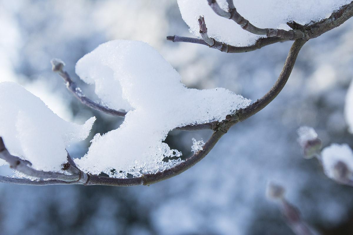 pdxfarm tree branch with snow