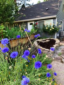 pdxfarm heart-shaped raised bed and blue flowers
